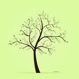De boom van de lente met bladeren Stock Fotografie