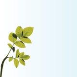 De boom van de lente met blauwe hemel Royalty-vrije Stock Foto's