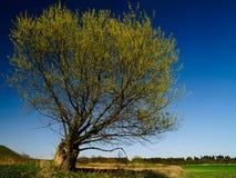 De boom van de lente tegen blauwe hemel Royalty-vrije Stock Foto's