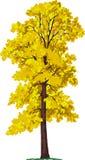 De boom van de linde. Vector Stock Fotografie