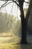 De boom van de okkernoot Stock Foto