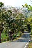 De boom van de orchidee op grijze weg Royalty-vrije Stock Fotografie