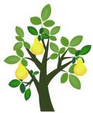 De boom van de peer Stock Foto's