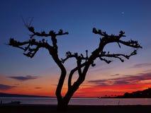 De boom van de pijnboom bij zonsondergang stock afbeeldingen