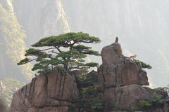 De boom van de pijnboom bovenop Berg Stock Foto