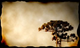 De boom van de pijnboom in canvas royalty-vrije stock foto
