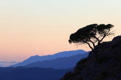 De boom van de pijnboom in de bergen Stock Foto's