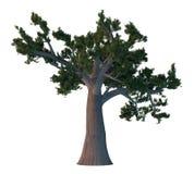 De boom van de pijnboom die op wit wordt geïsoleerdr Stock Afbeeldingen