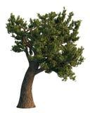 De boom van de pijnboom die op wit wordt geïsoleerdr Royalty-vrije Stock Foto's