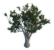 De boom van de pijnboom die op wit wordt geïsoleerdr Royalty-vrije Stock Foto