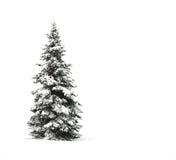 De boom van de pijnboom die op wit wordt geïsoleerdr stock foto