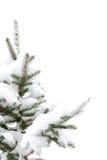 De boom van de pijnboom met sneeuw stock fotografie