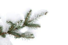 De boom van de pijnboom met sneeuw stock afbeelding