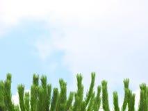 De boom van de pijnboom op de hemel Royalty-vrije Stock Afbeelding