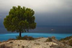 De boom van de pijnboom op de kust met azuurblauw water Royalty-vrije Stock Foto
