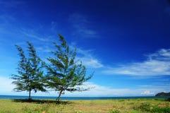 De boom van de pijnboom op het strand Royalty-vrije Stock Afbeelding