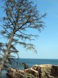 De boom van de pijnboom over de oceaan Stock Foto's