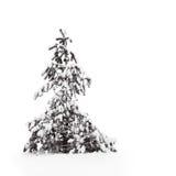 De boom van de pijnboom in sneeuw Stock Fotografie