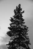 De boom van de pijnboom in sneeuw royalty-vrije stock afbeelding