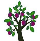 De boom van de pruim Royalty-vrije Stock Fotografie