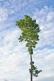 De boom van de regen Royalty-vrije Stock Foto