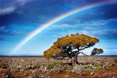 De Boom van de regenboog Stock Afbeeldingen
