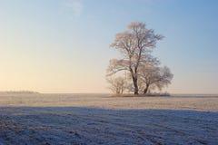 De boom van de rijp Stock Foto