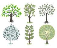 De boom van de schoonheid. Royalty-vrije Stock Foto's
