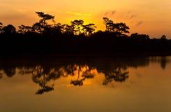 De boom van de silhouetpijnboom royalty-vrije stock foto