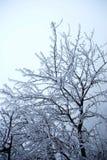 De boom van de sneeuw Stock Foto's