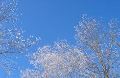 De boom van de sneeuw Stock Afbeeldingen