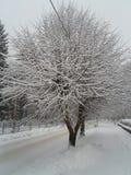 De boom van de sneeuw Royalty-vrije Stock Afbeeldingen