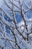 De boom van de sneeuw Royalty-vrije Stock Afbeelding
