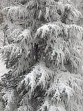 De boom van de sneeuw Stock Foto