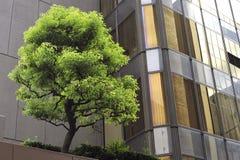 De boom van de stad Stock Afbeelding