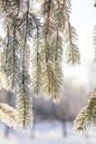 De boom van de takpijnboom in sneeuw stock fotografie