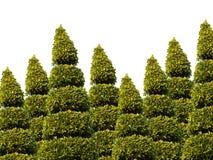 De Boom van de tuin Royalty-vrije Stock Afbeeldingen