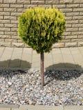 De boom van de tuin Stock Afbeeldingen