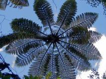 De boom van de varen Stock Afbeeldingen