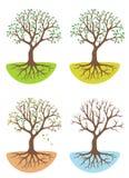 De boom van de vier seizoenen Stock Afbeeldingen