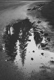 De boom van de vulkleibezinning op de weg in een pool Stock Fotografie