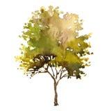 De boom van de waterverfillustratie Stock Afbeeldingen