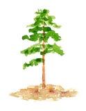 De Boom van de waterverfpijnboom, Getrokken en Geschilderde Hand Royalty-vrije Stock Afbeeldingen