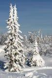 De boom van de winter Royalty-vrije Stock Fotografie