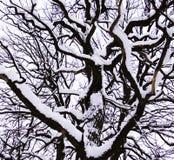 De boom van de winter Stock Foto's