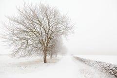 De boom van de winter Royalty-vrije Stock Foto