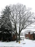 De boom van de winter Royalty-vrije Stock Afbeeldingen