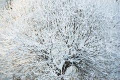 De boom van de winter Stock Afbeelding