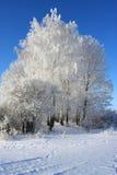 De boom van de winter Stock Afbeeldingen