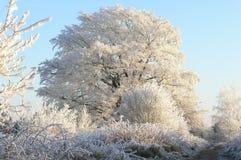 De boom van de winter royalty-vrije stock afbeelding